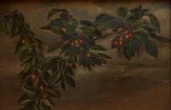 Branche-de-cerisier-12-